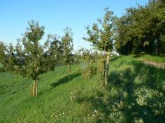 Obstlehrpfad Amtzell